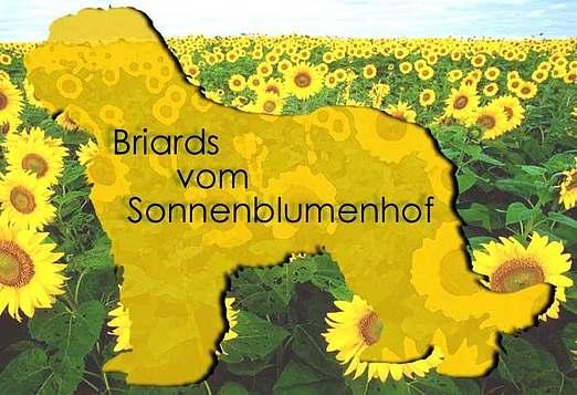Briards vom Sonnenblum...